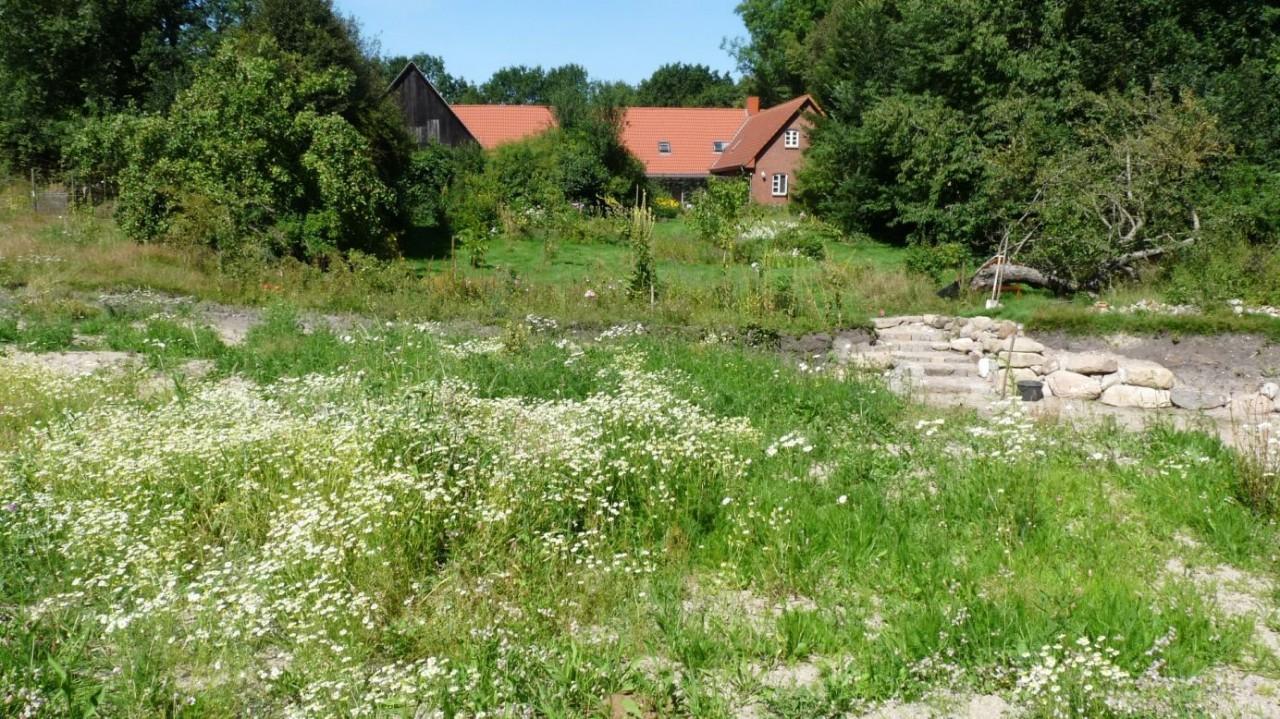 Anlage und Pflege meines Schmetterlingsgartens (2015-2016)