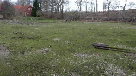 Mein Schmetterlingsgarten - Fotos zum BLOG 13.03.2017