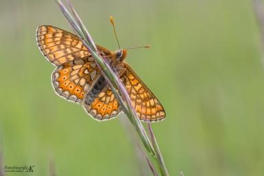 Schmetterlinge-Tagfalter 11.04.2017